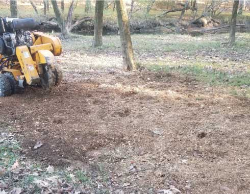 Land in Benson, NC after removal of very large stump