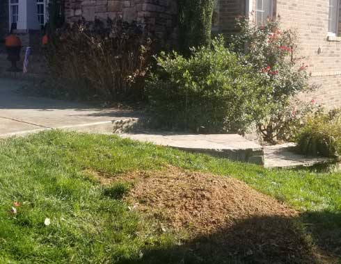Picture of yard in Cary, NC after stump removal process