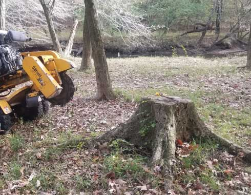 Very large stump in Benson, NC before stump grinding process