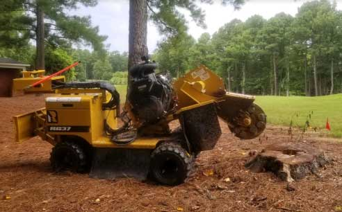 Raleigh-Cary-Apex-NC-Stump-Grinding-Services