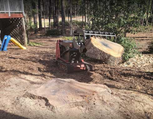 Raleigh-NC-Stump-Grinding-Job-Dingo-Piedmont-Stump-Grinding